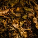 RayB05-The-Forest-Floor-APRIL