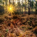 RayB08-Dawn-Rays-Hemsted-Forest-APRIL