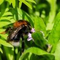 HayleyD-Bees-Repose-APRIL03