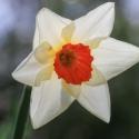 HayleyD-Daffy-APRIL04