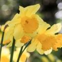 HayleyD-Spring-Pond-APRIL02