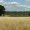 Field-Millpond-farm